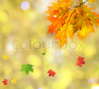 Leaves on the branches in the autumn forest