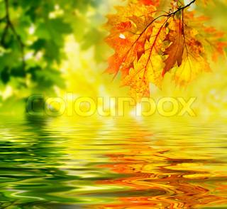 Farverige efterårsblade spejler sig i vandet