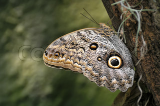 The brown butterfly sitting on a tree