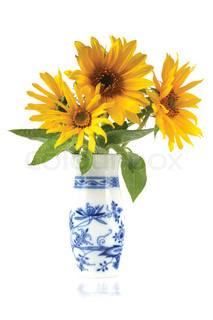 Sunflowers in a vase isolated
