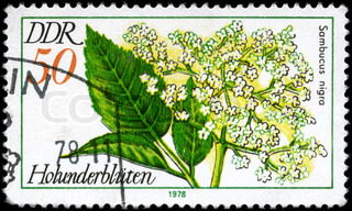 GDR - CIRCA 1978: A Stamp printed in GDR shows image of a Elder