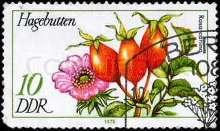 GDR - CIRCA 1978: A Stamp printed in GDR shows image of a Hips and Dog Rose
