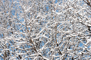 winter snow covered tree twigs on blue sky background (winter natural background)