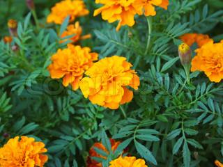 Billede af 'efterår, kronblad, bevoksning'