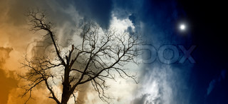 Dramatic background - broken tree, dark cloudy sky with bright star