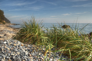 Grass at the coast of the Baltic, Denmark