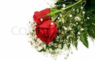 Two red roses with baby's breath
