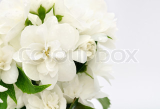 White Jasmine Bouquet