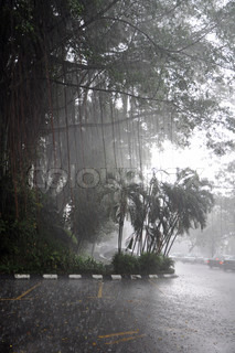 Tropical trees under rain's sheets of water