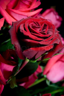 beautiful red roses bouquet closeup
