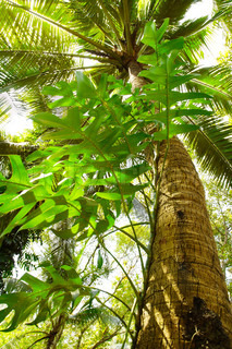 Giant Tree in the rain forest Bright jungle landscape