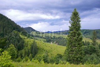 Summer mountain view with high fir tree and storm clouds