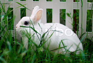 white rabbit near the fence