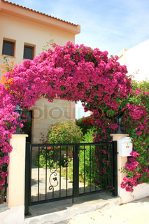 Pink flowers arch at the house