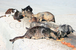 Homeless cats eating meat