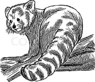 vector - hand draw red panda sitting on a branch