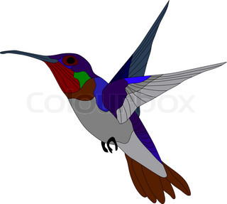 vector - hummingbird isolated on white background
