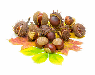 how to get chestnuts out of shells
