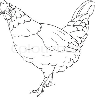 vector - hen isolated on background