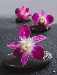 zen stones with orchid flowers on white background