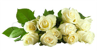 Beautiful bunch of white rose isolated on the white background