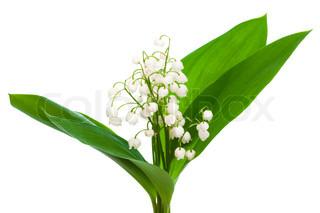 buket af liljekonval på en hvid baggrund