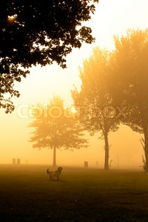 Moody orange mist over field with dog looking at camera