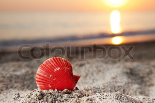 Summer vacations - seashell or scallop shell on sunset sea sand beach