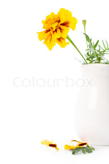 marigold flowers in vase isolated on a white background
