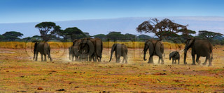 African safari, wild elephants family and panoramic landscape of Amboseli National Park, Kenya