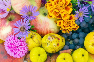 Real colors of autumn - October European plants, fruits and flowers background