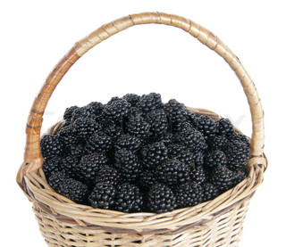 Wum basket with a fresh blackberry