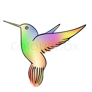 hummingbird - vector
