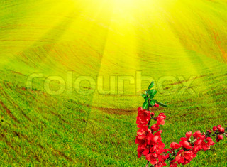 Nice rose branch and sun beams over meadow