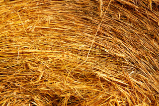 Dried yellow straw like as background
