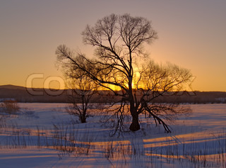 Winter landscape with a lonely tree at sunset