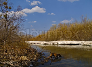 Spring landscape with last snow on river bank