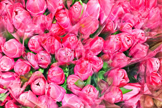 Many bouquets of pink tulips Visible flower buds of tulips
