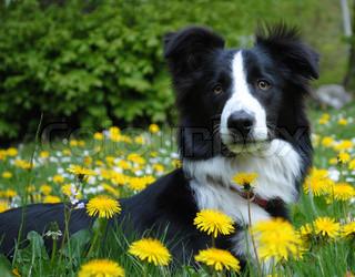 Billede af 'nuttet, hund, zoom'