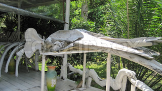 Image of 'Whale, mpc2012x, Thailand'
