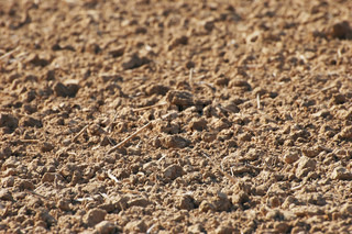Agriculture - the soil on the plowed field