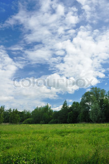 Landscape of a green field with trees