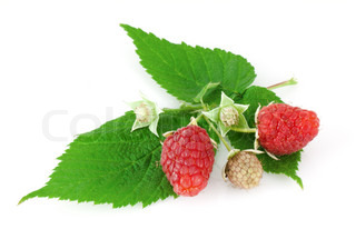 Raspberry leaves and flower