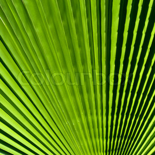 Close up of Tropical Green Leave Texture