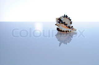 Marine coral and shells Reflected on the table