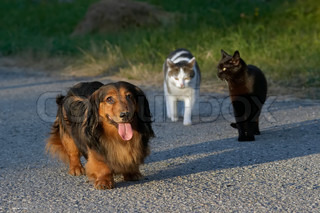 Predominance - snapshot of a dog and cats