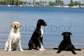 Three dogs at the beach