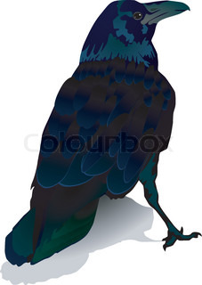 Vector image of a crow