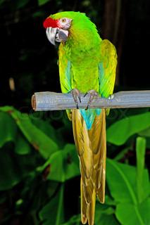 Farverige papegøje fugl sidder på aborre