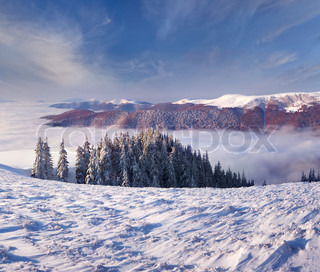 winter morning landscape in the